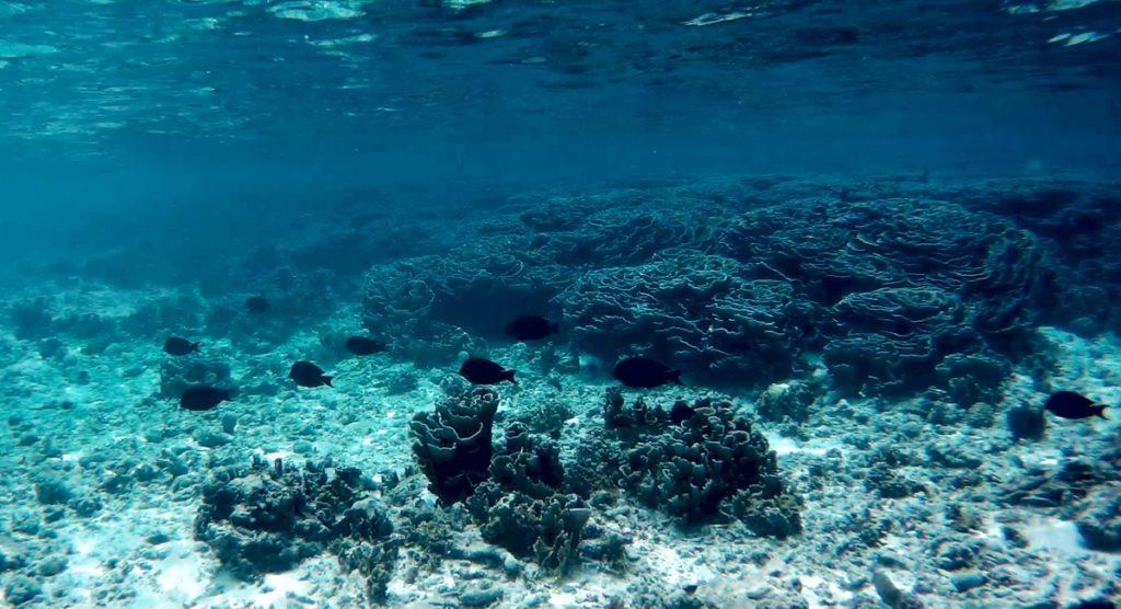 Maldive da non perdere