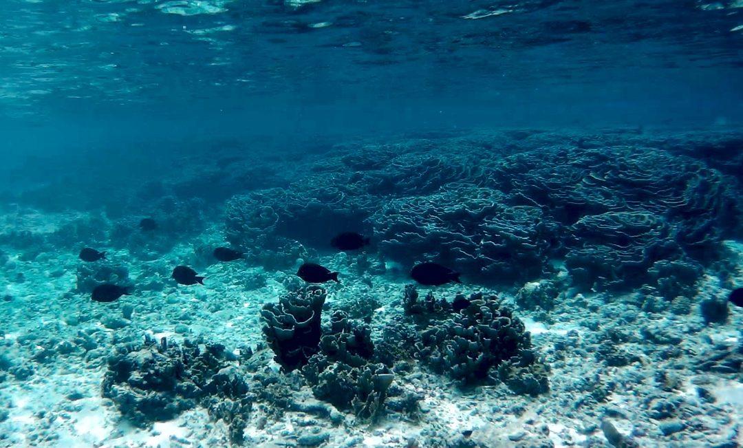 Le Maldive da non perdere